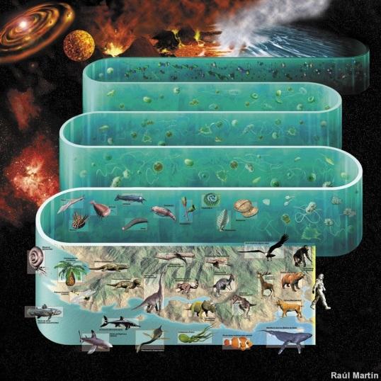 Evolucion de la Vida en el Planeta Tierra