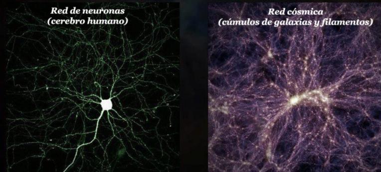 neuronas estrellas